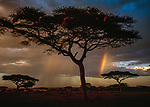 A storm roles through Serengeti National Park, Tanzania