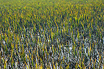 Sunlight is reflected amid marsh grass in South Carolina