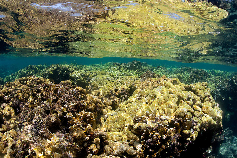 A coral reef flat at the surface of the ocean at Swan Islands, a remote group of islands 90 miles off the coast of Honduras.