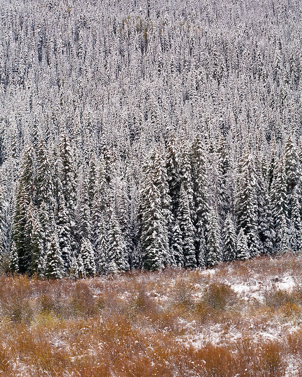 First snow on Colorado's Kebler Pass.