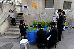 Men check for blemishes 'Hadass' branches, which are used in rituals during the Jewish holiday of Sukkot, a day before Sukkot begins, in the ultra-orthodox Jewish neighborhood of Me'a She'arim, in Jerusalem. The holiday commemorates the biblical 40-year long wandering of the People of Israel through the desert before reaching the promised land.