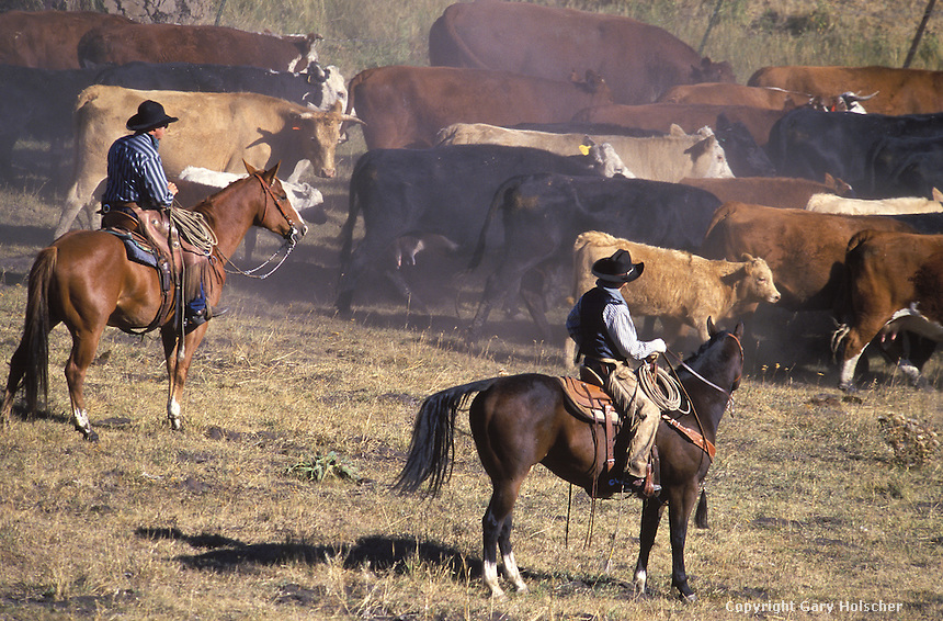 Image result for cowboys and cattle drives