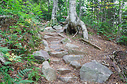 Rock steps along Greenleaf Trail in the White Mountains of New Hampshire USA during the summer months. A herd path has formed on the right-hand side to avoid the steps. Herd paths are a common problem along the White Mountains trail system, and if they are not blocked, they can create more erosion to the trail.