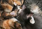 Sleeping kittens, Morocco