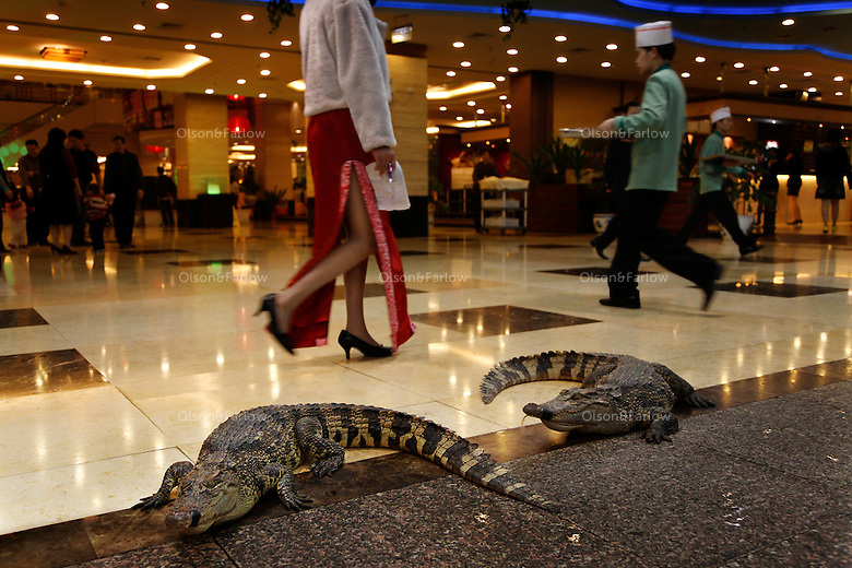 Finely dressed patrons in Guangzhou walk by restaurants that serve huge live reef fish and attract attention with live crocodiles on the floor of the mall. The crocs mouths were taped shut, and they would be meals soon, but people would be walking along, talking on their cell phones, not paying attention and trip over live, hissing, charging crocodiles.<br /> <br /> Initially reef fish only came from the South China Sea, but transport developed and fish now come from all over S.E. Asia.  The whole reef fish trade crashed with the 97-98 HK stock market crash.  LRF trade is directly linked to economy.  With China coming online financially the trade is booming.  These fish are often used for celebratory meals in Hong Kong, but in Guangzhou the fish are so cheap and the apartments are so small that many people eat out...  And the stereotype is that there is lots of food left on the table.  Often a fish is popular because of its color... more than its taste.