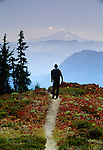 Hiker, Mount Rainier National Park, Washington