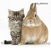 Animals - fondless photos