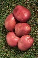 Red skinned Potatoes