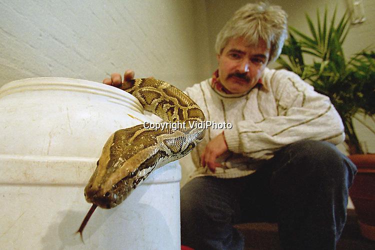 """Foto: VidiPhoto..ZWOLLE - Walter Getreuer, de meest bekende slangendeskundige van Nederland, haalt een meterslange """"donkere tijgerpython"""" uit zijn tijdelijke .verblijf; een witte ton. Het dier is met veel soortgenoten en enkele andere griezelige reptielen en spinnen, te zien van zaterdag 26 februari tot en met 19 maart op de slangentoonstelling """"Serpo"""" in Ecodrome in Zwolle. Donderdag werd een begin gemaakt met de inrichting van de expositie. Ook het 'zusje' van de beroemde, maar nooit gevonden, Enkuizer lanspuntslang is er te zien. Getreuer werd tijdens die affaire als deskundig-adviseur van de politie een nationale bekendheid."""