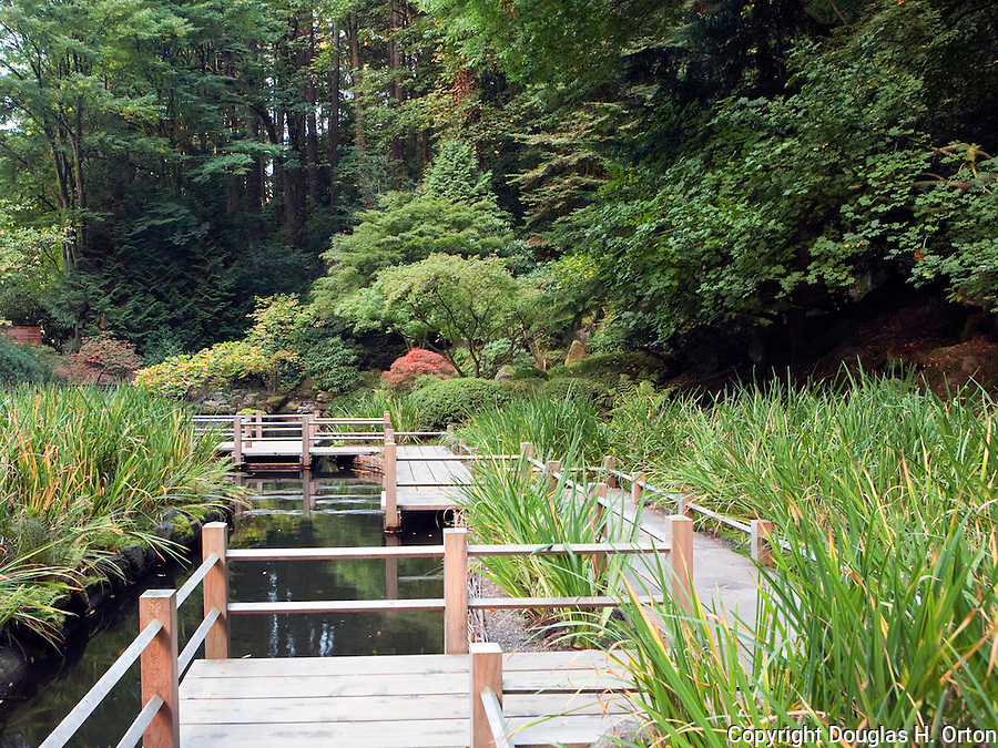 Zig zag bridge over koi pond and iris garden douglas for Portland japanese garden koi