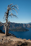 West Rim of Crater Lake with Wizard Island from Mt. Garfield trail