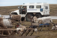 Bovanenkovo ,Yamal Peninsula, Russia, 09/07/2010..A Gazprom employee watches the Nenets, indigenous nomadic reindeer herders, preparing to leave their overnight camp on sledges heading north to the Russian Arctic coast. He is sitting in a vehicle called a Trekol. which is supposedly designed to avoid damaging the fragile Arctic terrain..