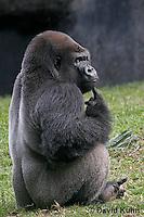 Primates, Lemurs