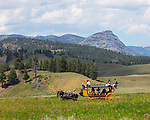 Visitors ride on a stagecoach in Yellowstone National Park.