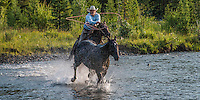 Cowboy roping a horse while crossing a Wyoming River like most Cowboys and cowgirls living the western lifestyle.