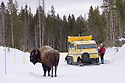 Winter visitors and Bombardier snow coach with Bison on the road; Yellowstone National Park, Wyoming. .#D0401449