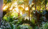 Illustrated morning light through palm trees, Worth Garden, California