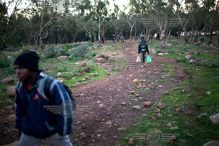 A group of migrants from Sub-Saharan Africa walking in the Gurugu Mountains where about 1200 migrants have set up a camp deep in a forest, hidden from the police and authorities. They are carrying bags of food, much of which they have scavenged from bins. The camp is near the Spanish exclave of Melilla and many of the migrants try to break into the city in hope of eventually finding a way to enter Europe.