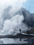 Steam rises over dead trees in Yellowstone National Park.