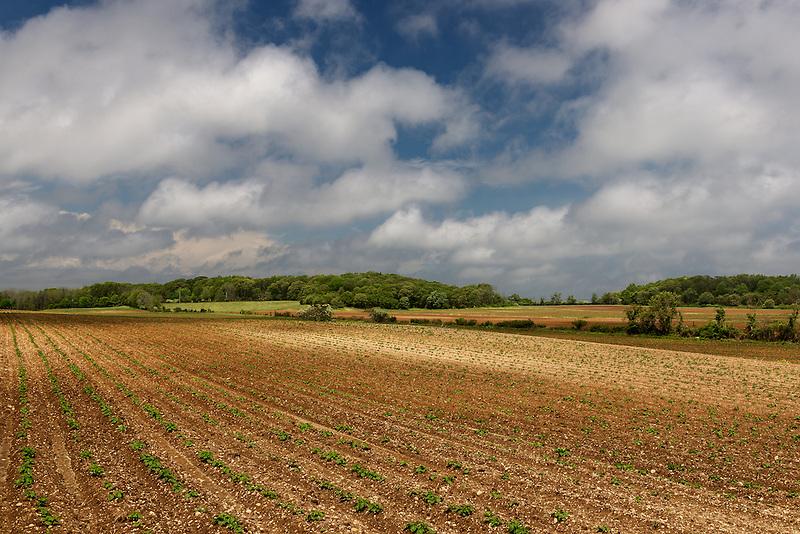 Potato Farm<br /> Riverhead, Long Island