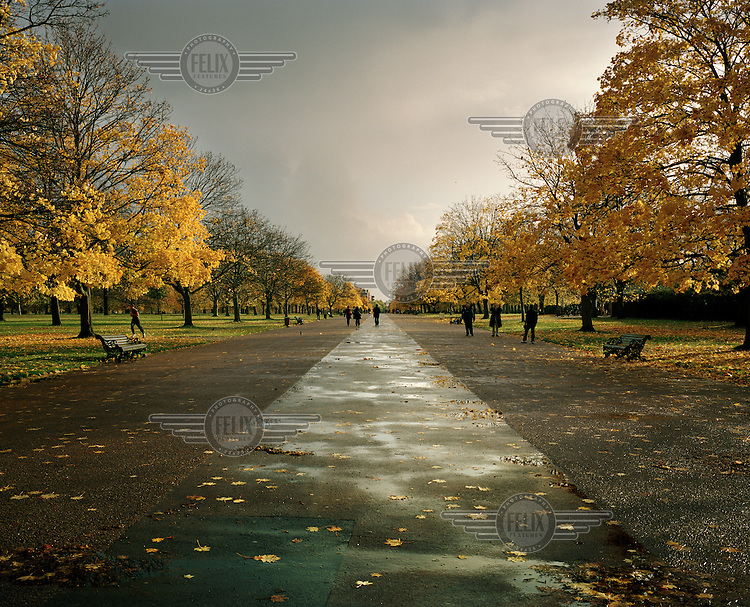 London's Hyde Park in late Autumn.