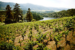 The 33-year-old Cabernet vineyard surrounds the western side of Burgess Cellars, which overlooks Bell Canyon reservoir and the Mayacamas mountain range, in St. Helena, CA., on Saturday, June 6, 2009.