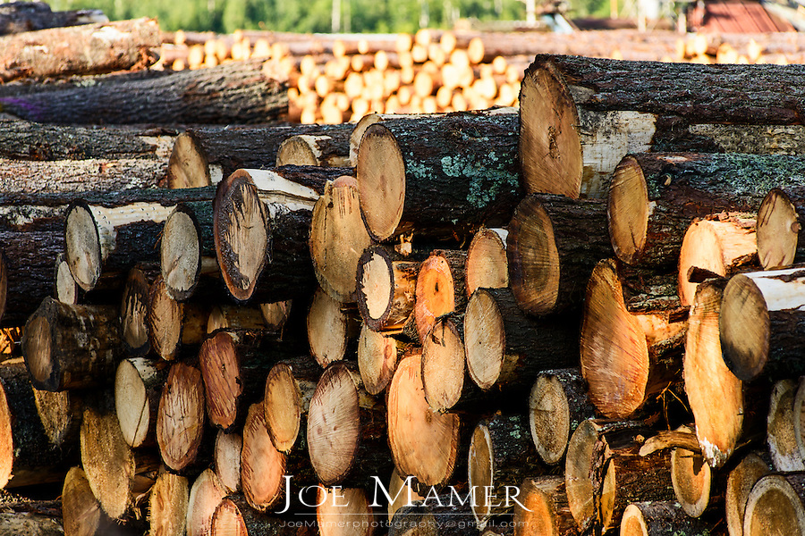 Piles of softwood logs cut and stacked at a sawmill waiting to be cut into dimensional lumber for the construction market.