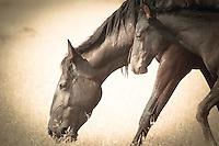 Motherhood - Wild Horse and baby - Utah