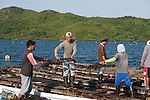 Jewelmer pearlfarm workers carefully lower newly cleaned pearl oysters back into the sea.
