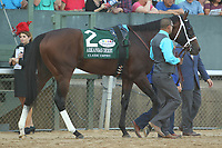 HOT SPRINGS, AR - APRIL 15: Classic Empire #2, before the running of the Arkansas Derby at Oaklawn Park on April 15, 2017 in Hot Springs, Arkansas. (Photo by Justin Manning/Eclipse Sportswire/Getty Images)