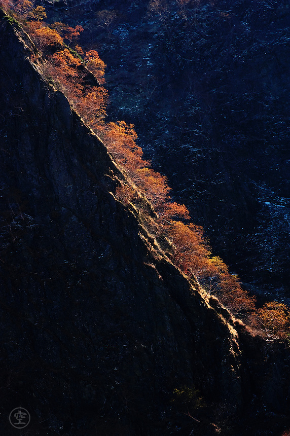 Morning light catches a steep ridge of autumn birch trees while a dusting of snow clings to the dark cliff behind in autumn in the Hotaka Mountains, Kamikochi, Japan.