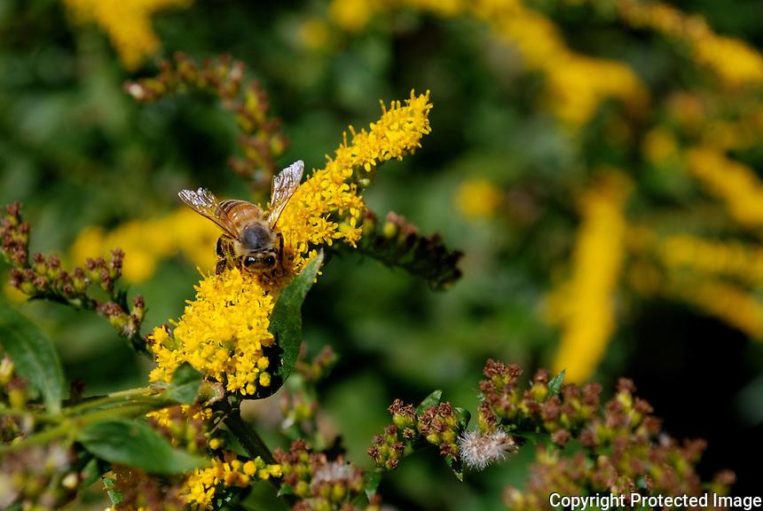 Bee on flowers.