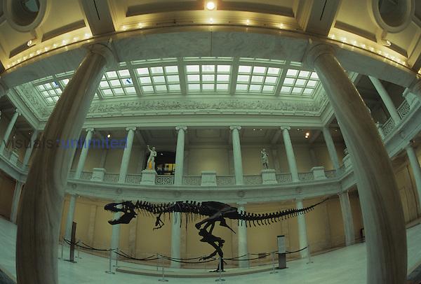 Tyrannosaurus rex Dinosaur skeleton in a museum display.