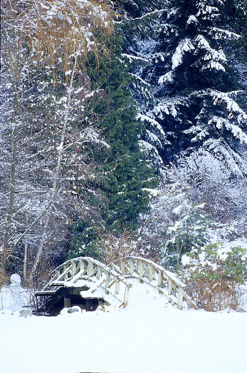 Wooden bridge over stream with background of evergreens and deciduous trees covered with dusting of snow, Stanley Park, Vancouver, BC.