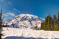 It may look like a winter scene, but this close-up of Mount Rainier was photographed from the tree line where altitude and elevation inhibits further growth of trees and shrubs and the lush evergreen forests peter out into icy, snow-covered expanses of white. Look closely and you will see one of the 25 major glaciers on the peak that look much like a rocky, frozen river of ancient ice that ever so slowly flows down this enormous active volcano at its own pace. Some of the glaciers you can see here are (from left to right) Van Trump Glacier, Wilson Glacier, and Paradise Glacier.