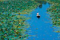 Dal Lake, Srinagar, Kashmir, Jammu and Kashmir State, India.