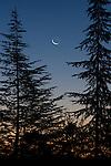 Crescent moon at dawn, Shingle Springs, California