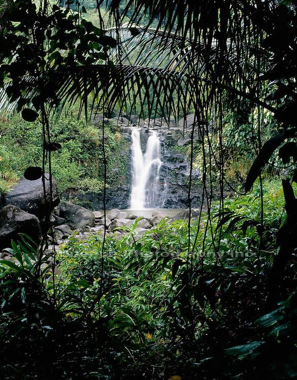 """""""Rain forest, Hana Coast, Maui   HAWAII"""""""
