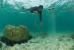 Aquarium trade fisherman on hooka. Paint compressor supplies air to the fishermen who can stay underwater long to catch ornamental fish.