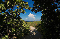 Florida, Delray Beach, path to beach