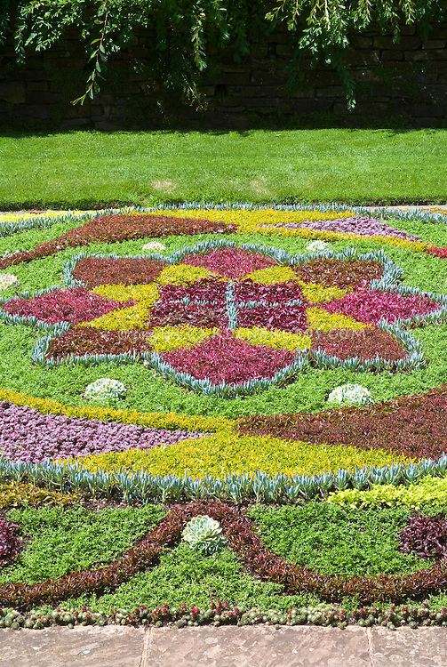 Using succulent plants as woven tapestry of ground covers Plant