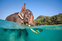Rajan the swimming elephant in shallow water with his mahout riding on top in the Andaman islands, India
