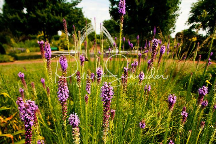 Plants In Full Summer Glory At Belmont Nc 39 S Daniel Stowe Botanical Gardens Near Charlotte North