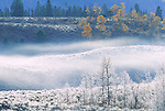 Frosted landscape, Yellowstone National Park, Wyoming