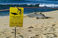 A sign warns curious onlookers to keep a safe distance from an endangered Hawaiian Monk Seal resting on Sandy Beach along Oahu's east coast. Scientific name (Monachus schauinslandi)