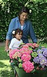Foto: VidiPhoto<br /> <br /> DOORN - Eveline de Roover brengt donderdag samen met haar oppaskinderen Sylvano (3) en Desi (1) in haar siertuin in Doorn extra kleur aan met bloeiende tuinhortensia's. Vanwege het relatief koude weer bloeien de meeste hortensia&rsquo;s in de tuin later dan normaal. Zaterdag 20  en zondag 21 juni is het Open Tuinen Weekend als afsluiting van de Groei &amp; Bloei Nationale Tuinweek. Meer dan 1.000 tuineigenaren in heel Nederland stellen dan hun tuin gratis open voor publiek. Er worden meer dan 100.000 tuinliefhebbers verwacht. In de meeste regio&rsquo;s is er zelfs een speciaal routeboekje van open tuinen beschikbaar. Het bijzondere evenement is een initiatief van Groei &amp; Bloei, de grootste tuinvereniging van Nederland, en wordt dit jaar voor de achtste keer op rij georganiseerd. Groei &amp; Bloei heeft 145 lokale afdelingen en zo&rsquo;n 50.000 leden. Thema voor dit jaar is &quot;Water in en om de tuin&quot;. De botanische naam van de hortensia is Hydrangea en betekent letterlijk &lsquo;watervaatje&rsquo;. De hortensia is dan ook een stevige drinker.