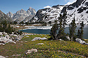 WY00623-00...WYOMING - Glacier lilys and Lake Solitude in Grand Teton National Park.