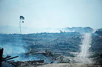 Palm oil plantations are rapidly expanding in Indonesia with severe environmental and social consequences.