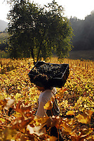 The Wine Valley in San Fernando, where most wine cellars and wine yards for fine exportation products are spread. Besides its high economic importance for Chile, the place is one of the favorite of international tourists.