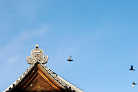 pigeons fly over the temple of zojo-ji in downtown tokyo